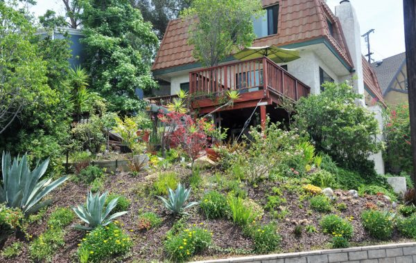 422 Redwood (6)